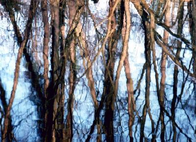 Tree reflections, Digswell Lake, Hertfordshire