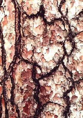 Tree bark, Kew Gardens, London